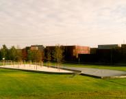 Mirrored Grove
