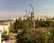 Car-free model Housing Development